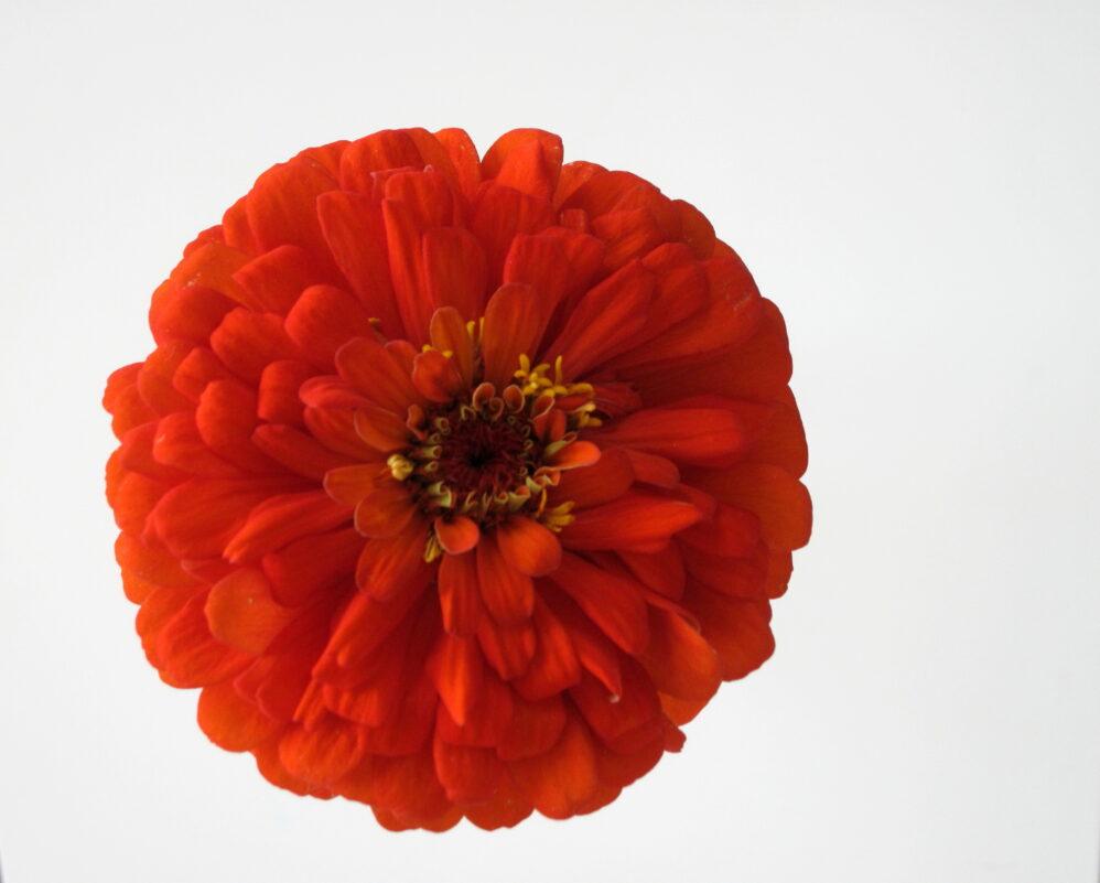 Blume Rund