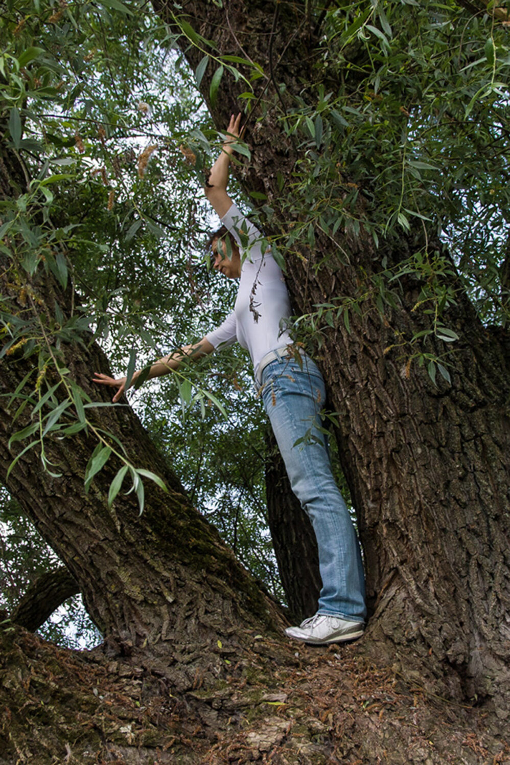 Zauber-Baum